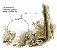 Капканы из подручных материалов в лесу