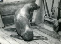 Korkosh - Сага о морских котиках