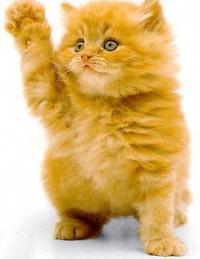 Необычайные приключения рыжего котенка по имени Мурр
