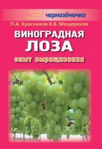 Виноградная лоза. Опыт выращивания